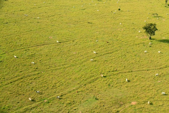 Cattle dotted throughout the incredibly green landscape